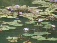 高雄観光地 澄清湖