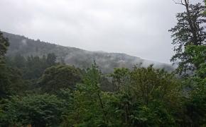 阿里山の眺め