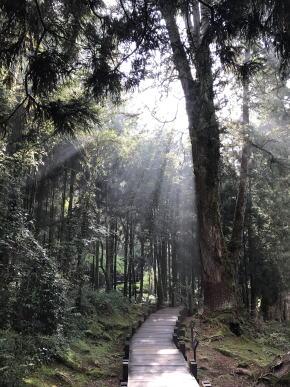 阿里山森林遊楽区