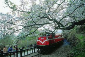 阿里山おすすめ 森林鉄道